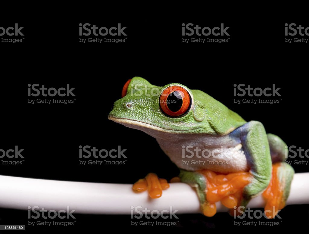 frog sitting on a leed stock photo