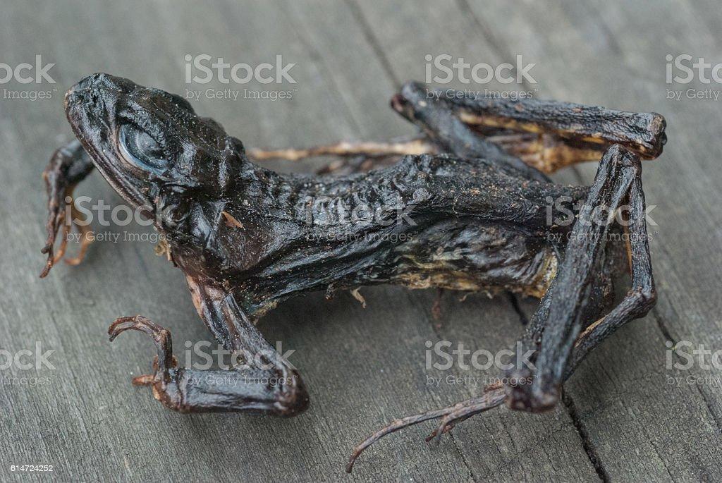 Frog skeleton stock photo