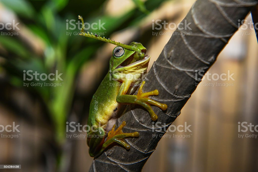 Frog VS Grasshopper stock photo