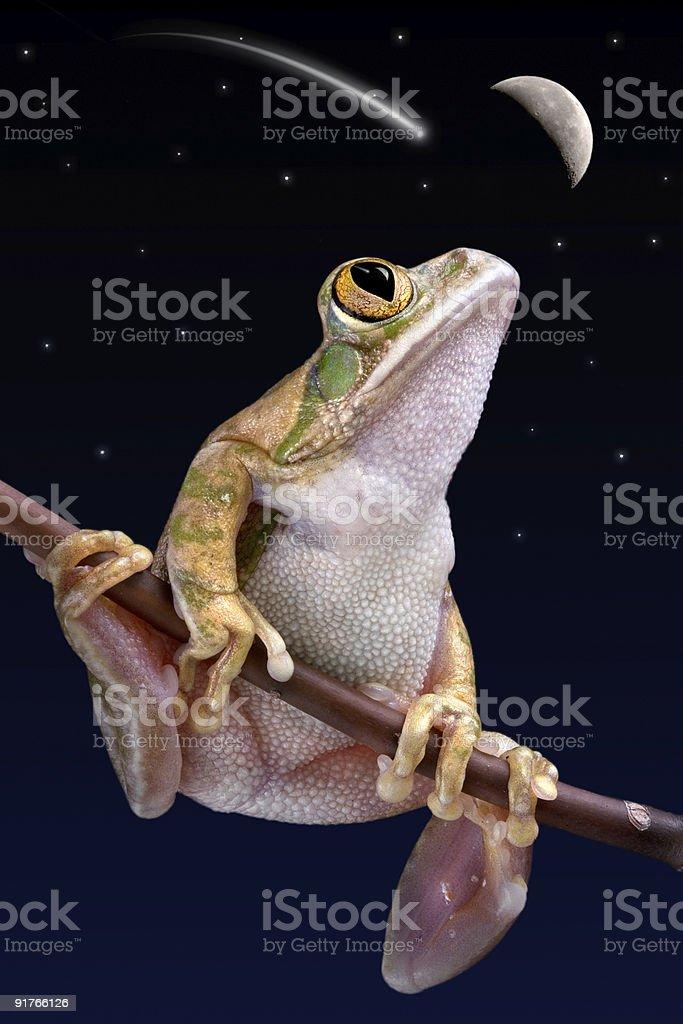 Frog watching shooting star stock photo