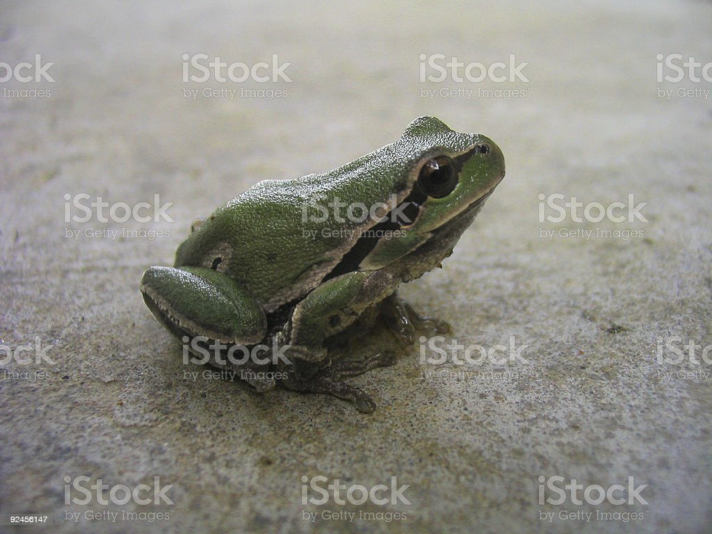 frog with clipping path royalty-free stock photo