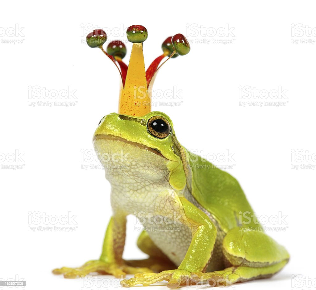 frog with crown royalty-free stock photo