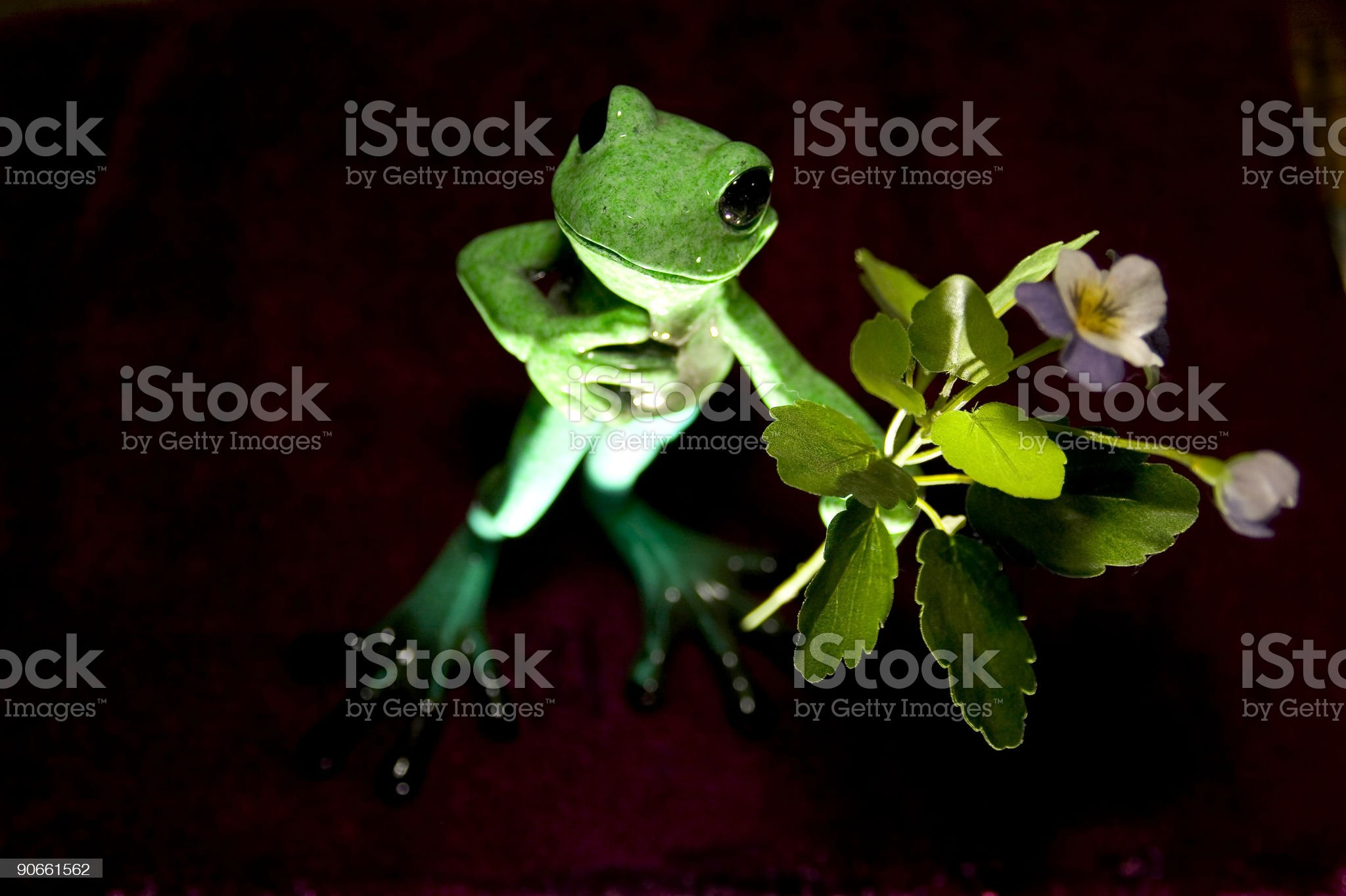 Frog with Flowers royalty-free stock photo