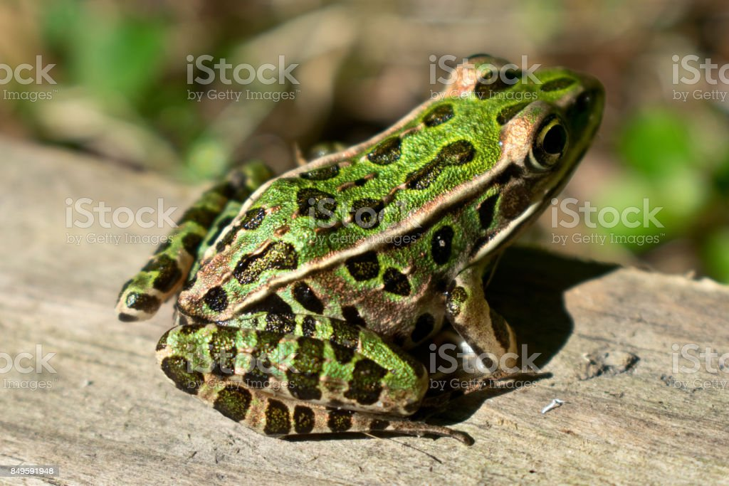 Frogs are Friends stock photo