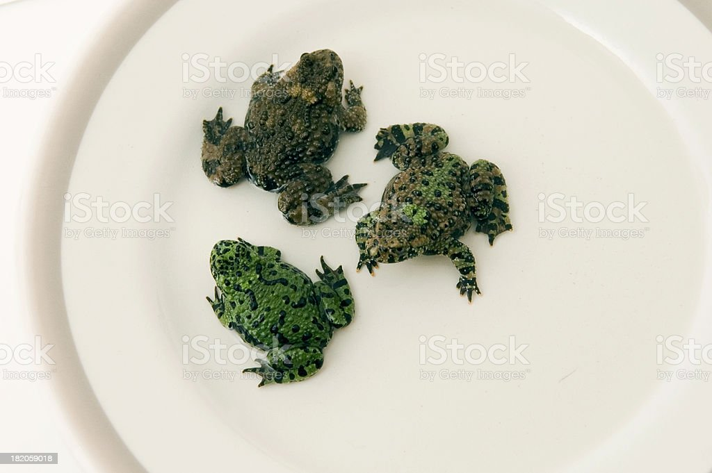 Frogs on a Plate royalty-free stock photo