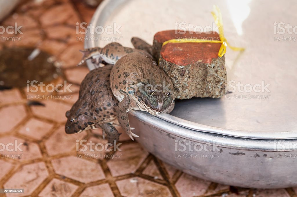 Frogs trying to escape from a Vietnamese market stock photo