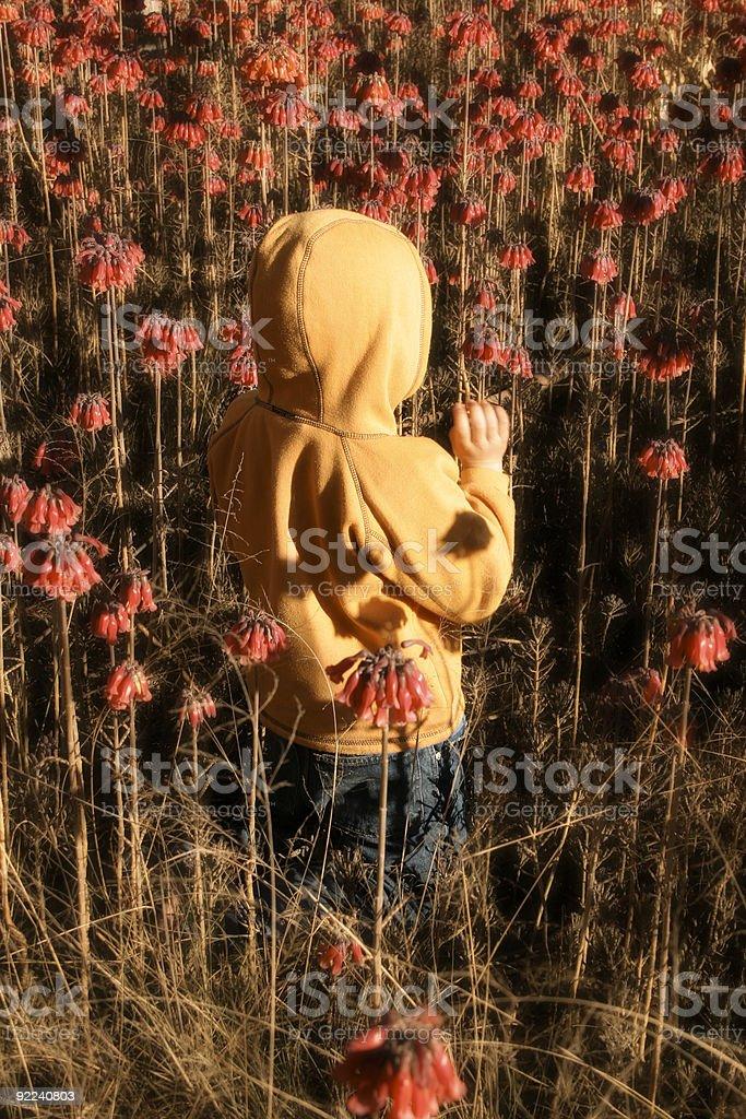 Frolicking amongst wildflowers royalty-free stock photo