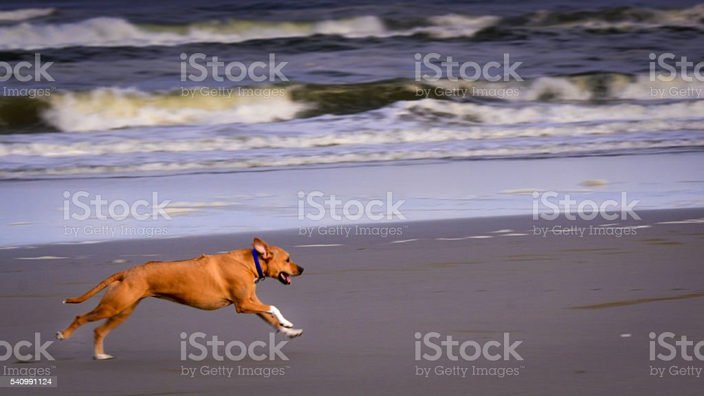 Frolicking on the Beach stock photo
