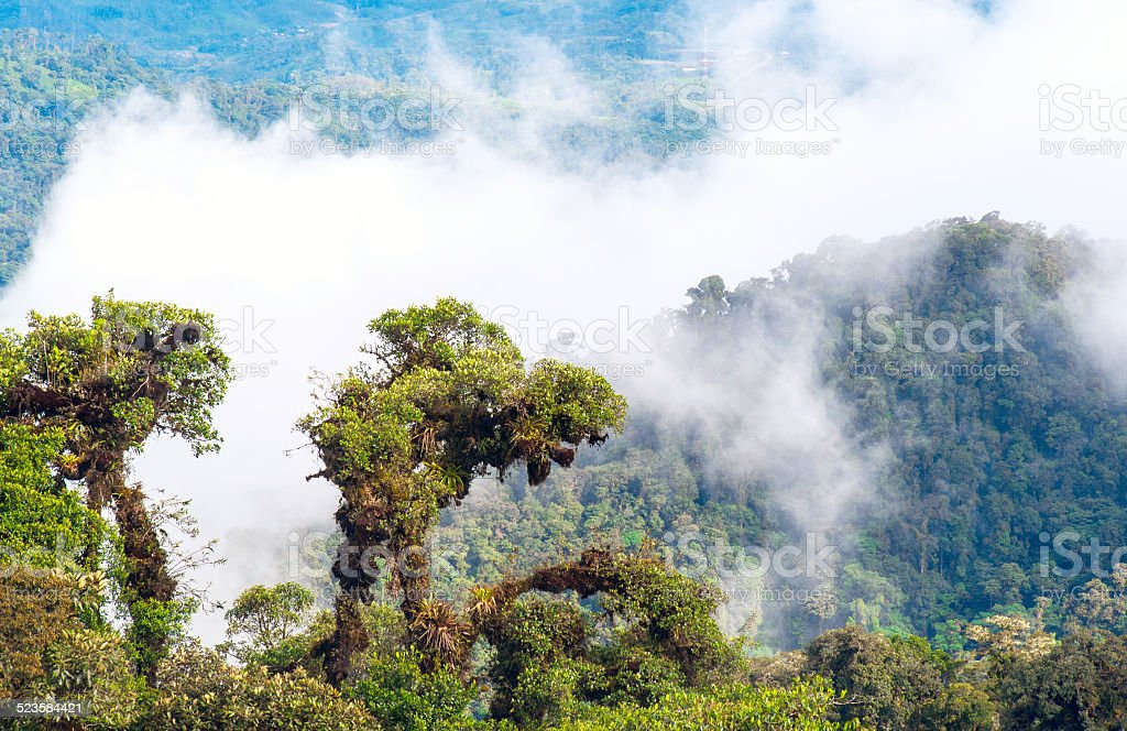 From Andes to Amazon rainforest, Ecuador stock photo