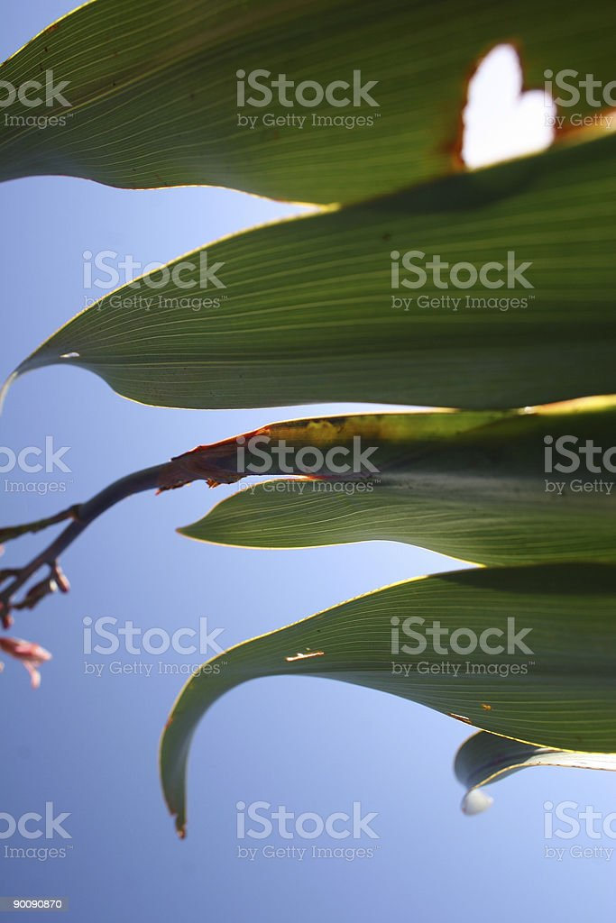 From Nature with Love royalty-free stock photo