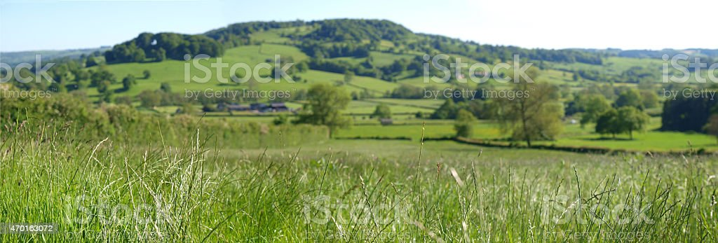 From the long grass stock photo