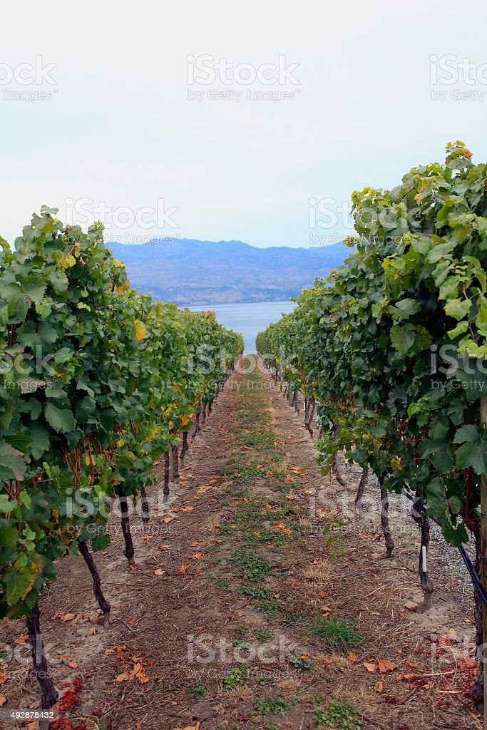 From The Vineyard To The Lake, stock photo