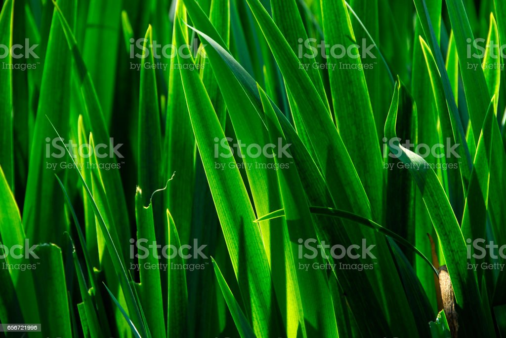 Frond background stock photo