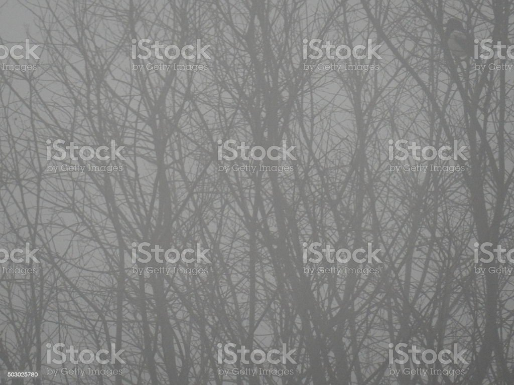 Fronds in the fog stock photo