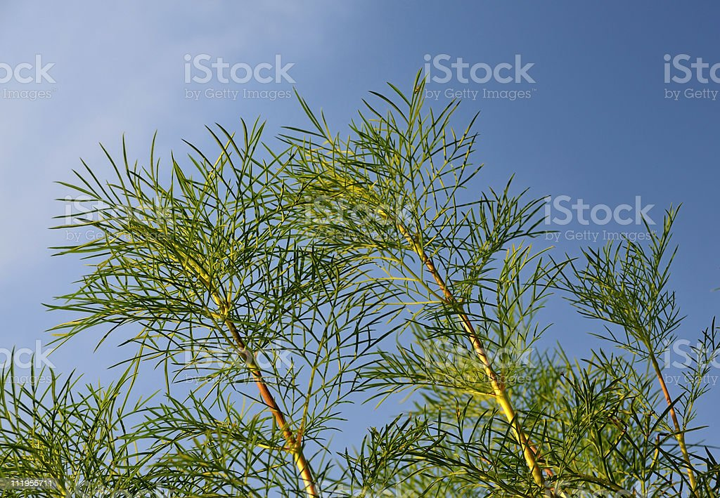 Fronds with the Sky stock photo