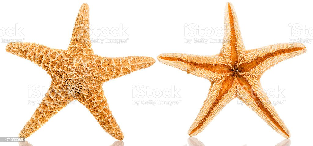 Front and Back of Star Fish, Isolated on White stock photo