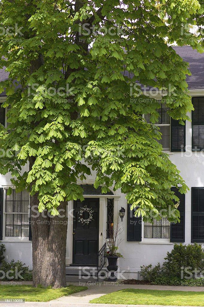 Front Door with tree stock photo