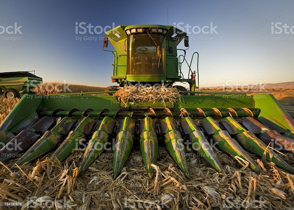 Front of a green corn combine in a corn field stock photo