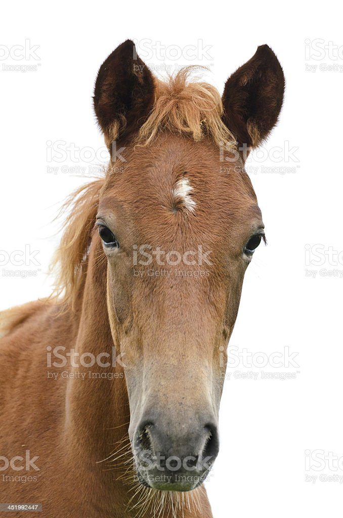 Front of the horse head.. stock photo