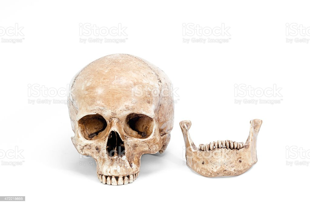 Front view of human skull isolated on white background stock photo