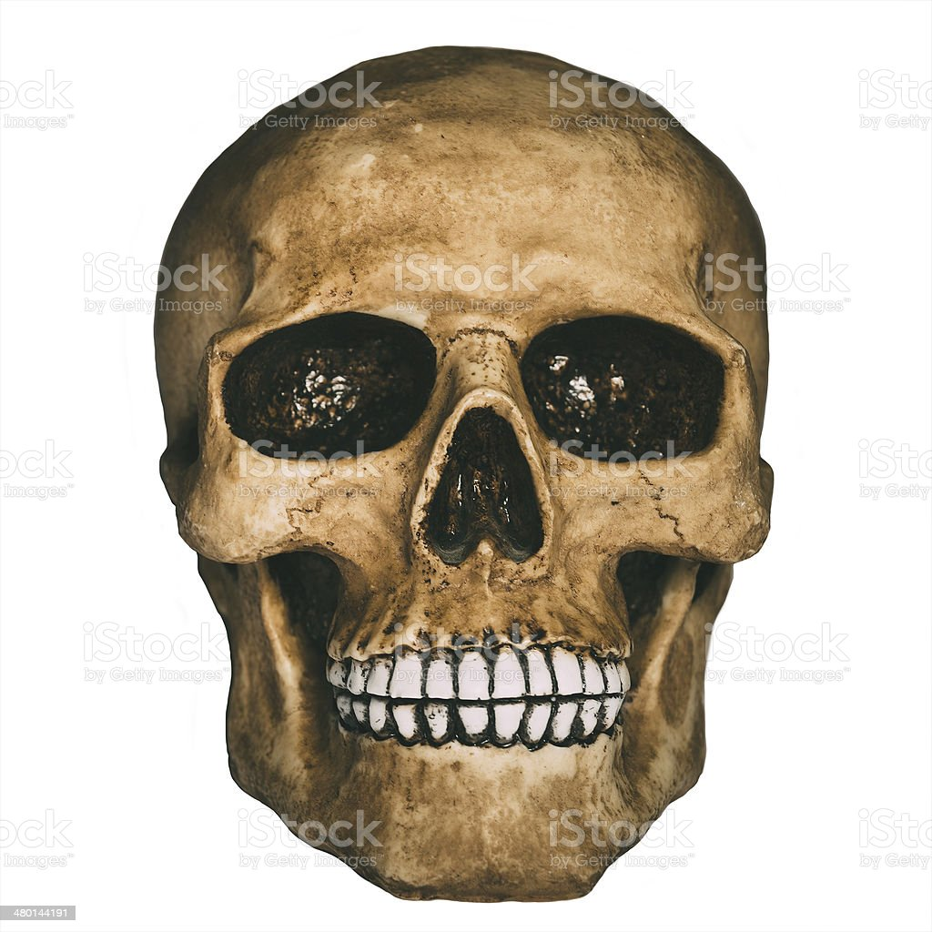 Front view of human skull over white background royalty-free stock photo