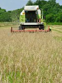 Front view of modern combine harvester during harvesting