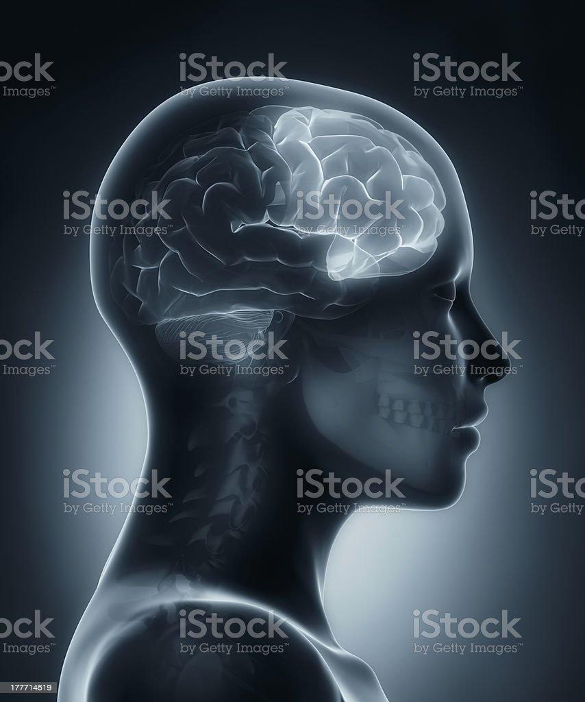 Frontal lobe medical x-ray scan stock photo