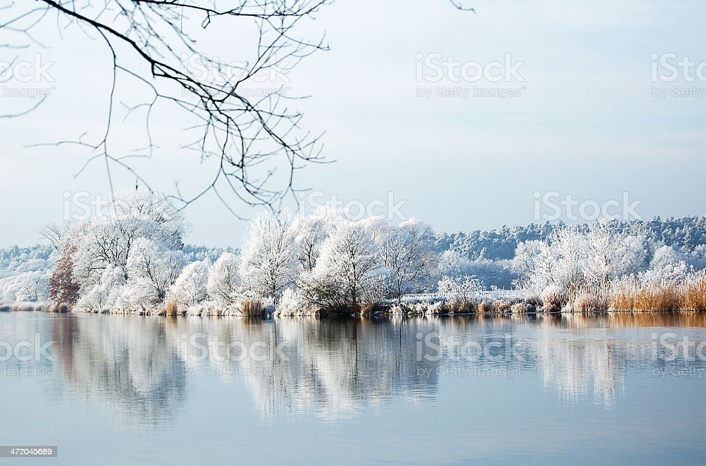 frost at willow tree on river royalty-free stock photo