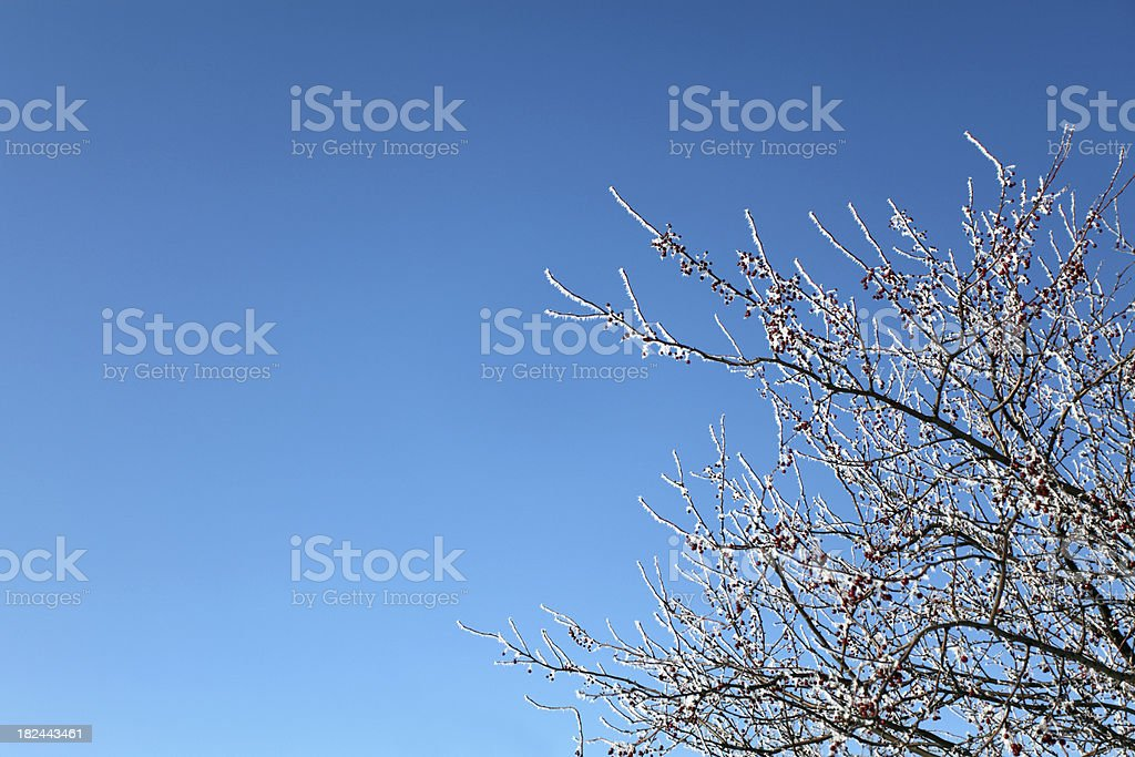 Frost Berry Background royalty-free stock photo