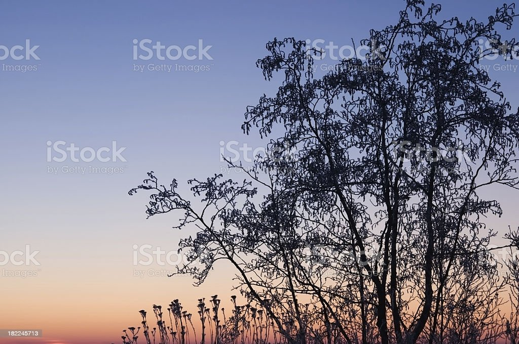 Frost covered tree against sunset sky stock photo