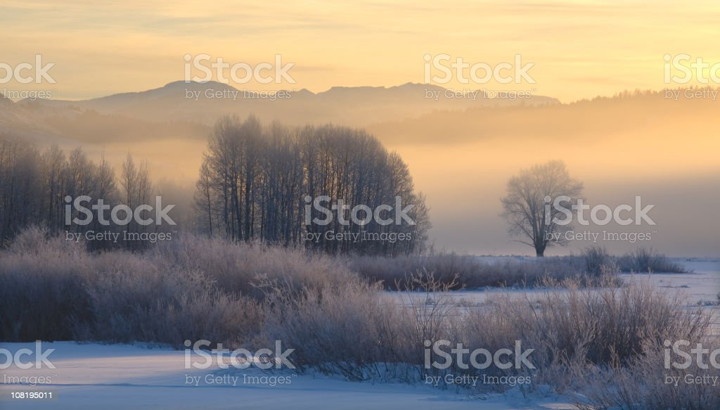 Frost Covered Trees at Sunrise royalty-free stock photo