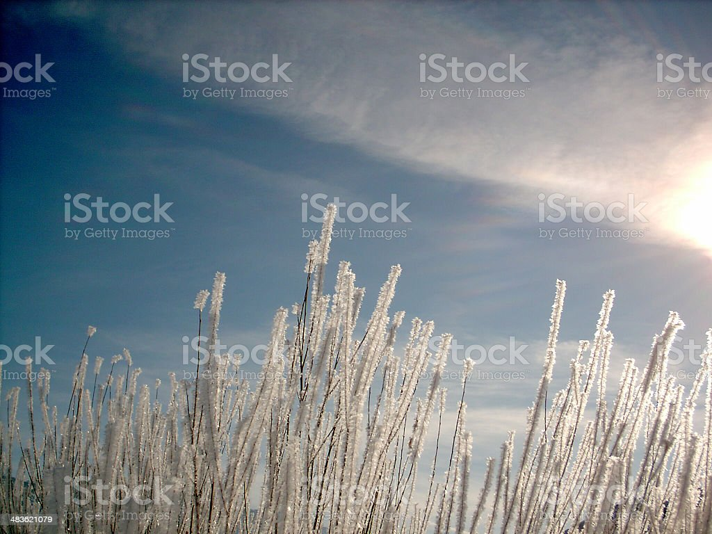 Frost crystals royalty-free stock photo