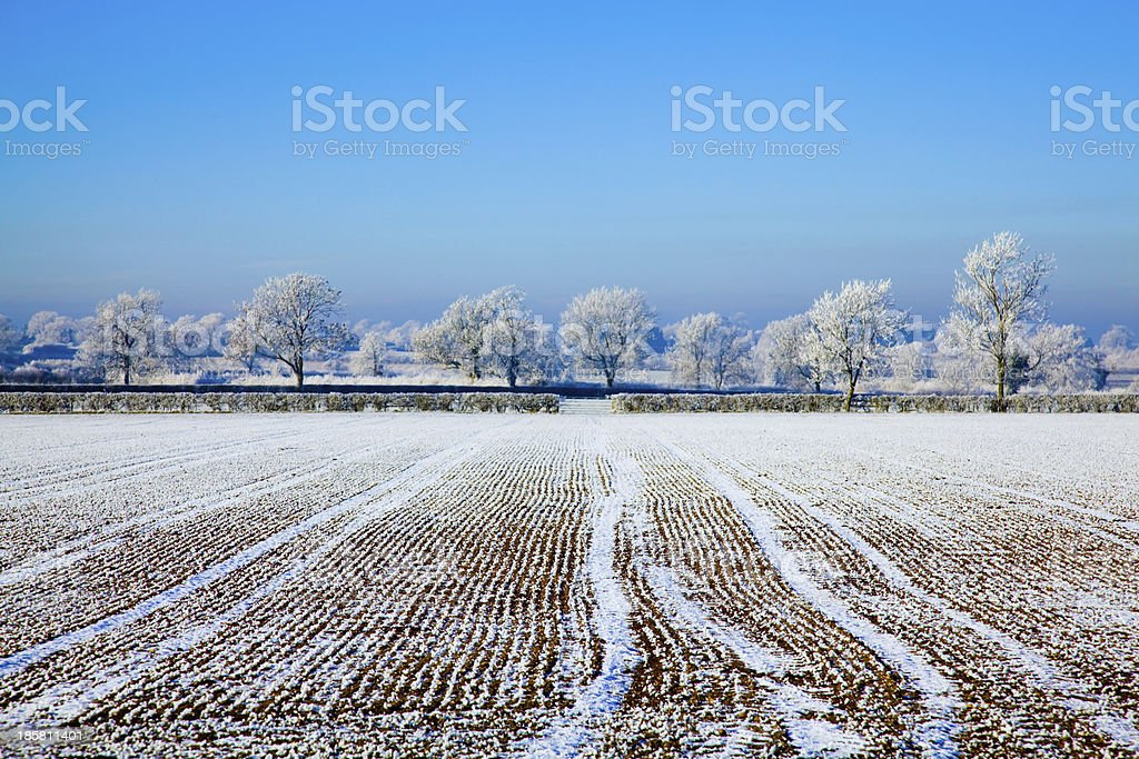 Frost on a farm field royalty-free stock photo