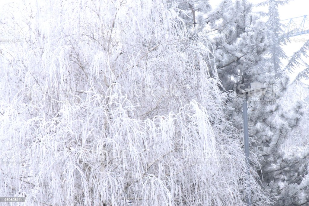 Frost on the branches of deciduous trees stock photo