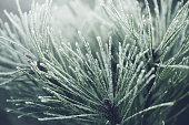 frost on the branches of plants