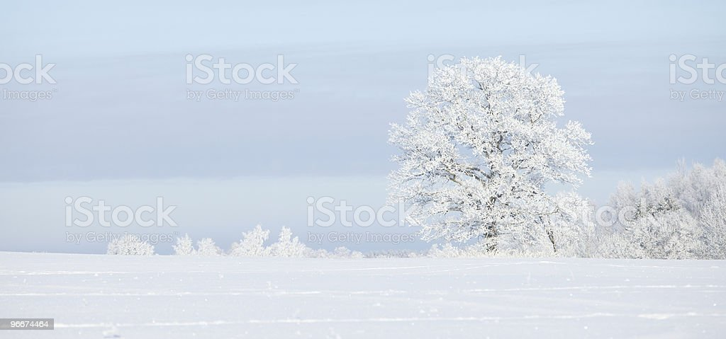 Frost on the lonely tree royalty-free stock photo