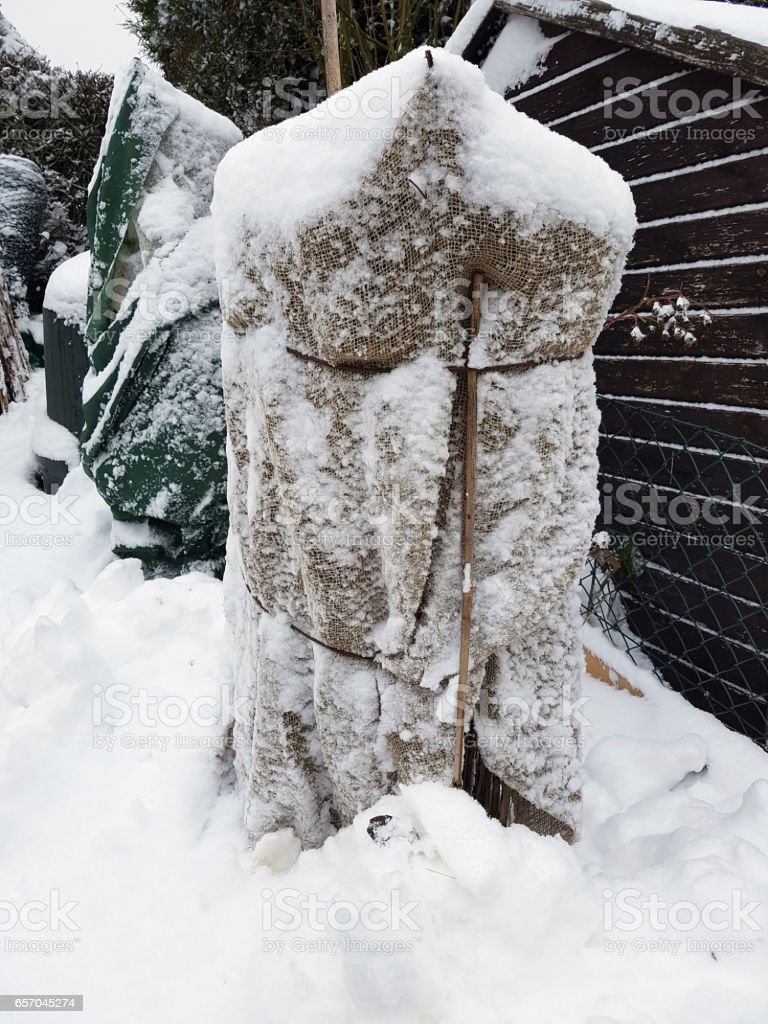 Frost protection, sackcloth, stock photo