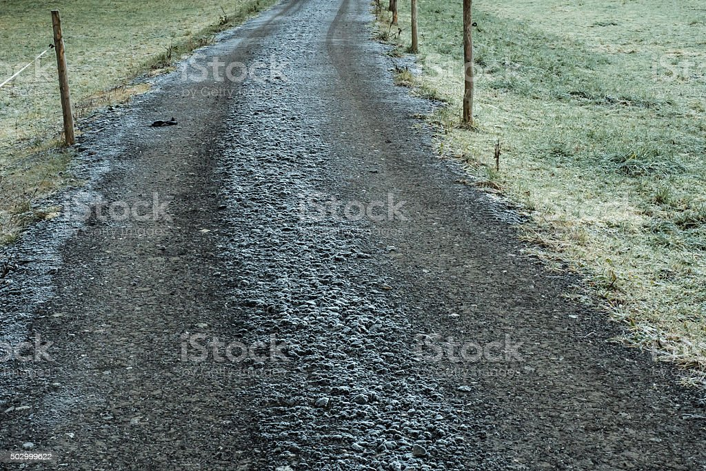 Frost-covered stock photo