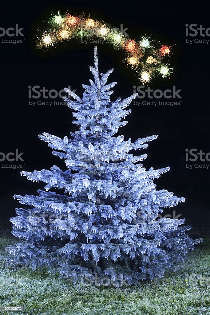 frosted christmas tree royalty-free stock photo