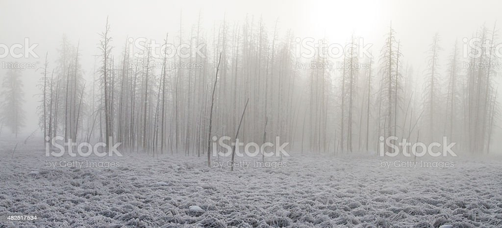 Frosted foggy petrified forest stock photo