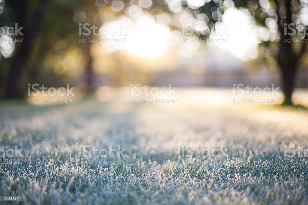 Frosted grass on a blurry bokeh sunrise backdrop stock photo