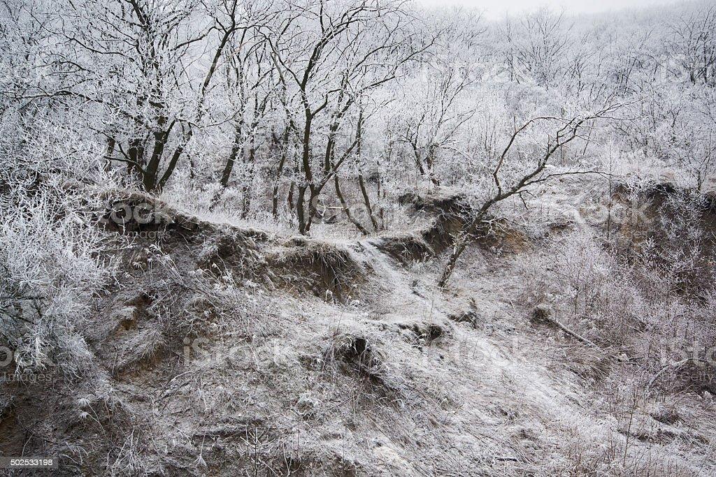 Frosted hill de invierno mañana III foto de stock libre de derechos