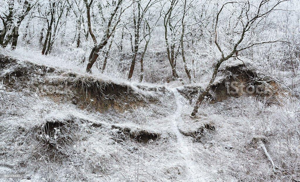 Frosted hill de invierno mañana panorama foto de stock libre de derechos