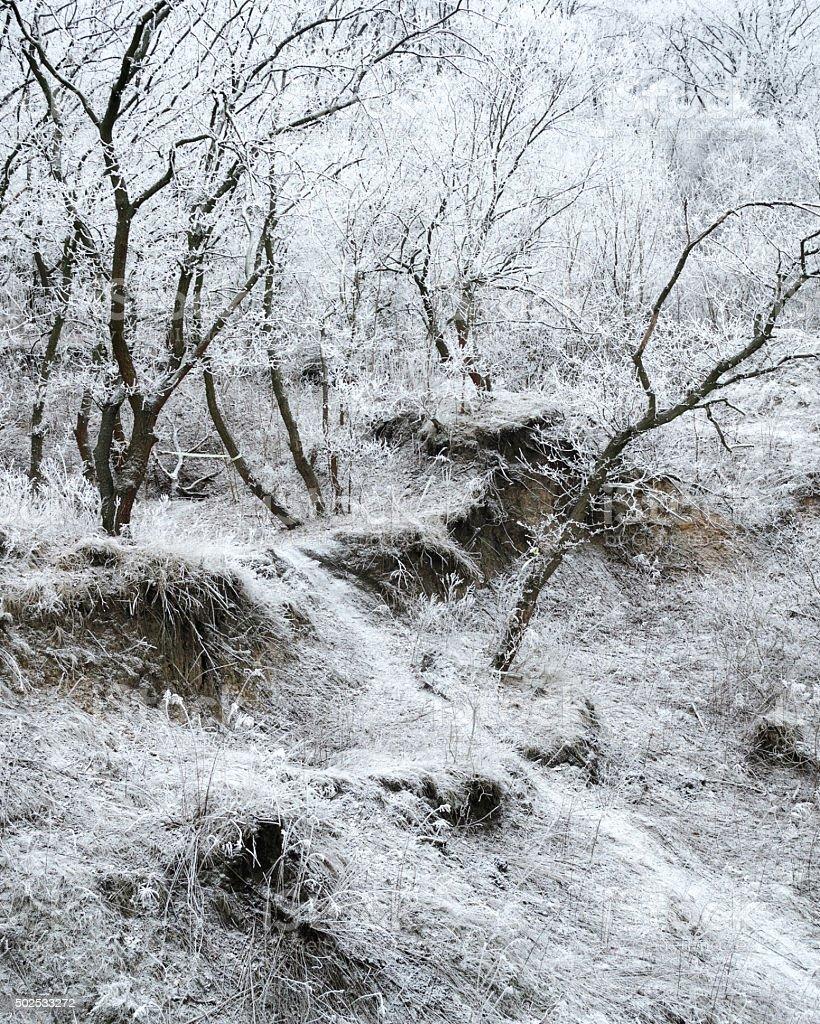 Frosted hill de invierno por la mañana foto de stock libre de derechos