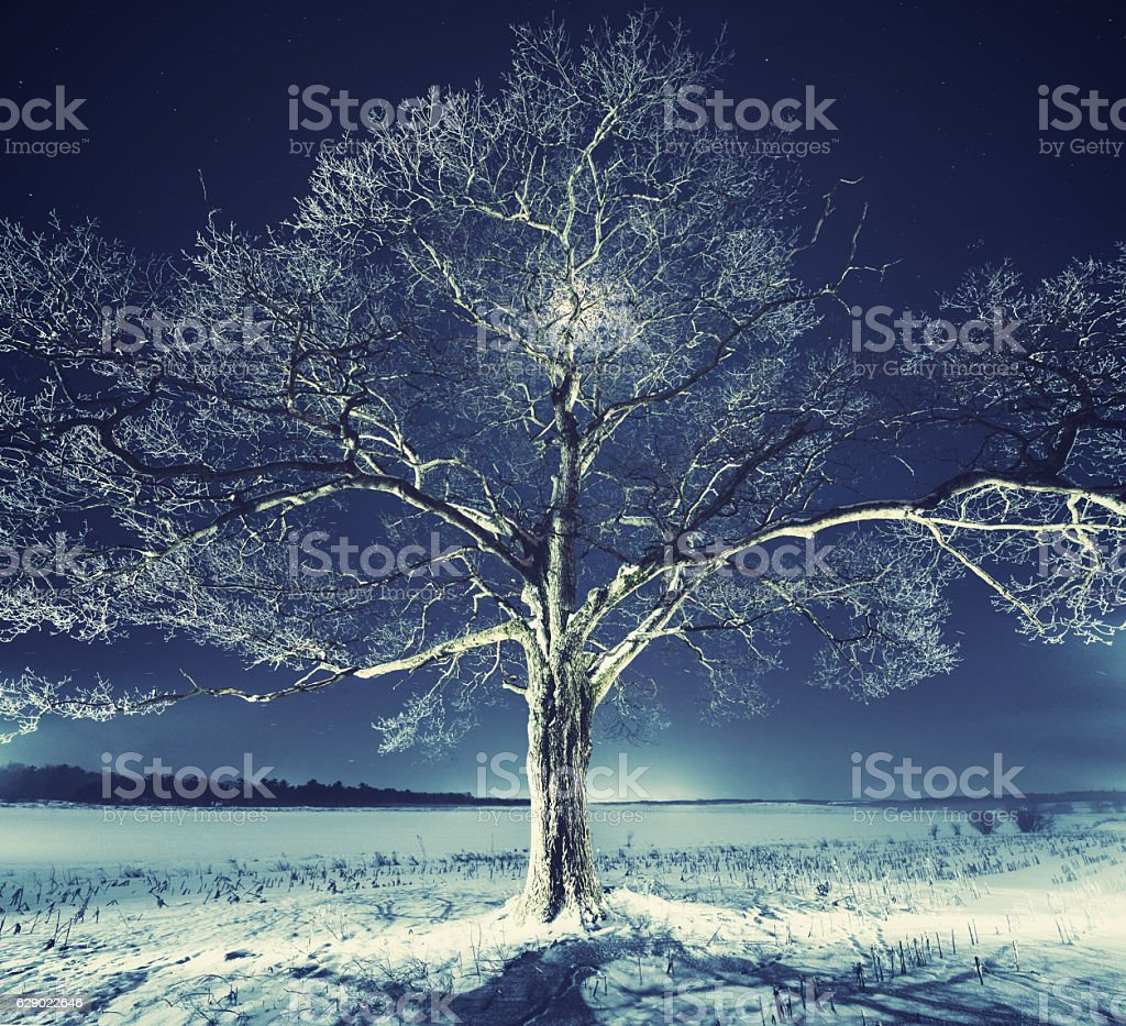 Frosted in Moonlight stock photo