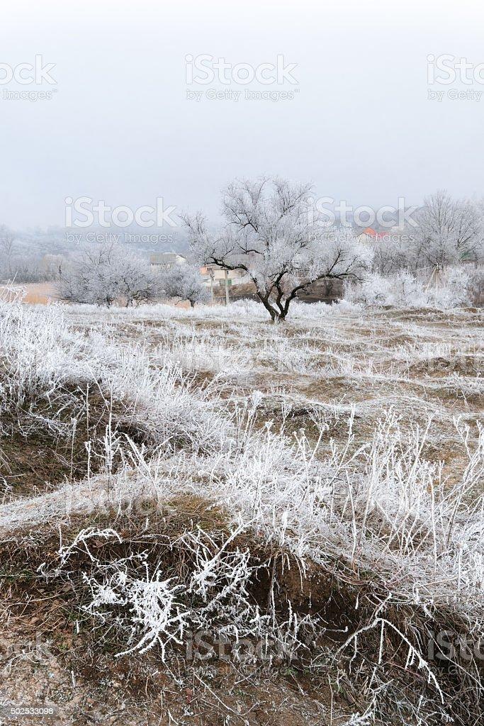 Frosted mañana hill III foto de stock libre de derechos