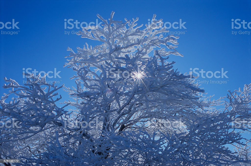 Frosted Oak, West End, Mount Magazine, Arkansas stock photo