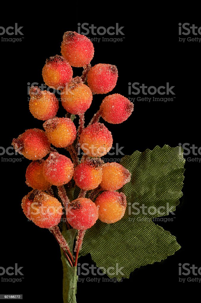 Frosted red and orange berries, green leaves, black background royalty-free stock photo