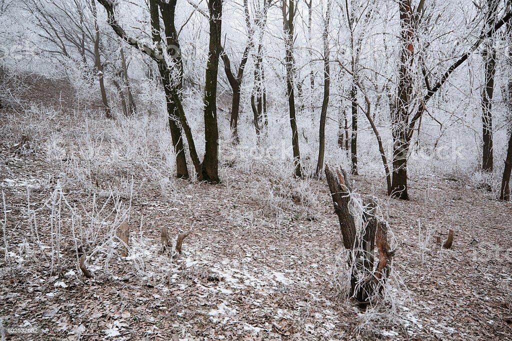 Frosted enganche en el bosque foto de stock libre de derechos