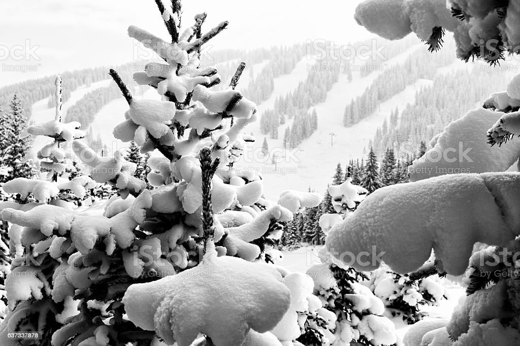 Frosted Snow Trees Vail Colorado Winter Wonderland stock photo